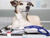 Ricetta-elettronica-anche-per-i-farmaci-veterinari